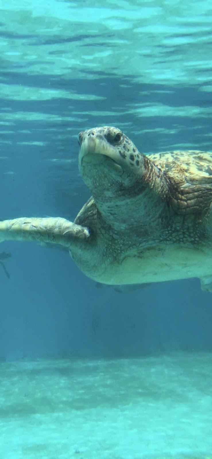 Wallpaper, sfondi iPhone, oceano, tartaruga, acqua