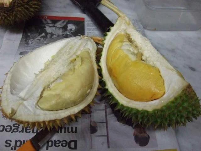 bahaya durian