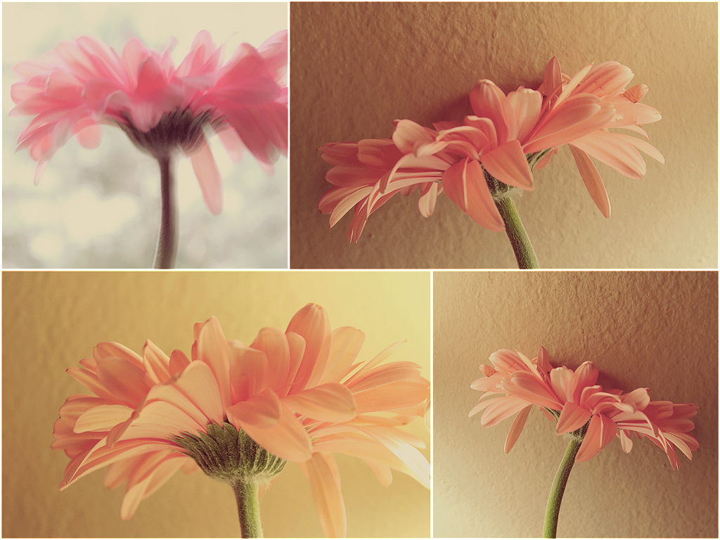 vintage gerbera collage