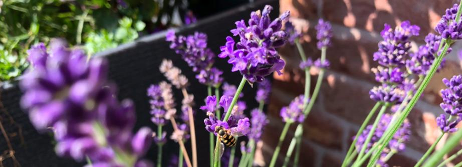 Lavendel Aussaen Lavendel 2020 02 28