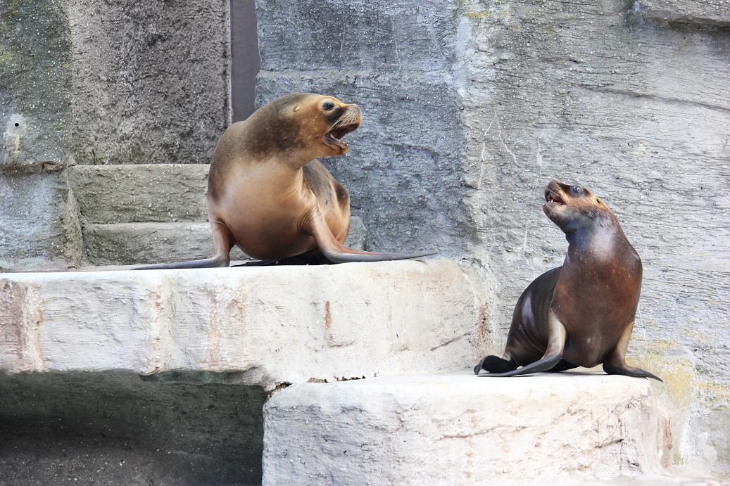 lachtani v zoologické zahradě Schönbrunn