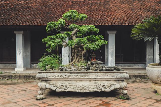 a bonsai tree growing in a pot