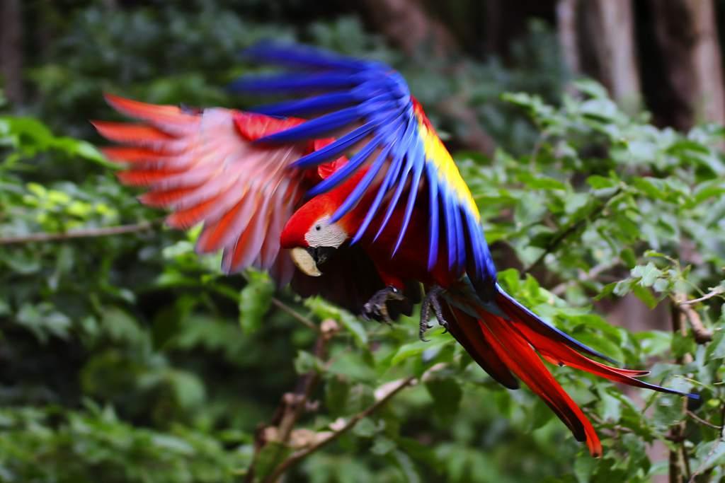 Los 10 animales más bonitos del mundo OMG!