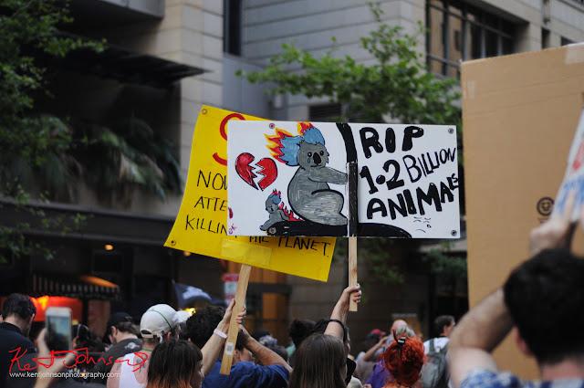 Sydney Climate Rally - Koala sign, 'RIP 1-2 Billion Animals'