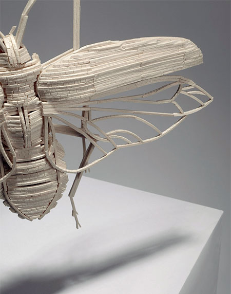 Matchstick Insects 05