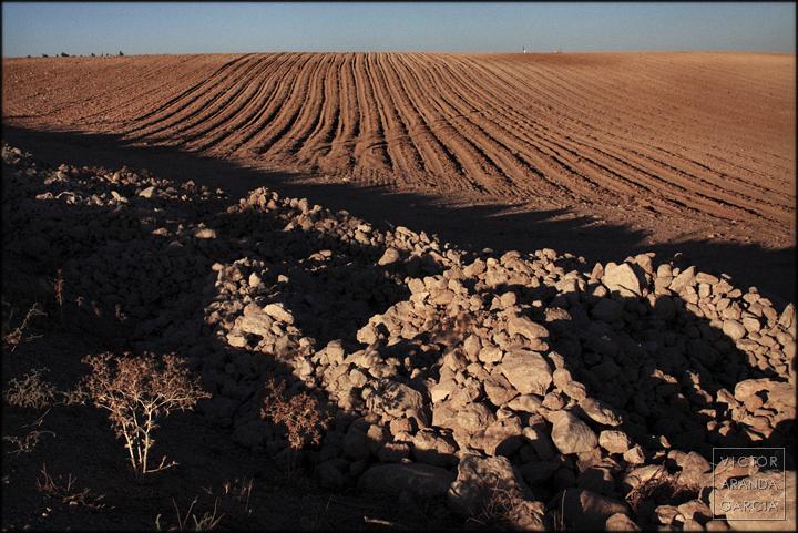 paisaje,fotografia,El_Escobar,murcia,cultivos