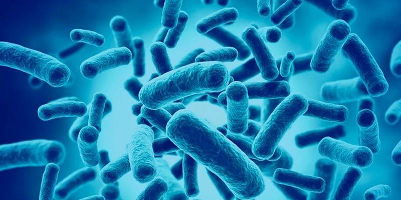Publicado na revista Nature, no final de fevereiro, estudo sugere que a suplementação de cepas específicas de B. Bifidum para a microbiota intestinal de pacientes podem transformá-los em bons respondedores para tratamento de câncer de pulmão.