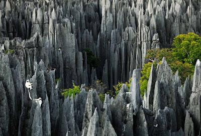 A floresta de pedra de Madagascar