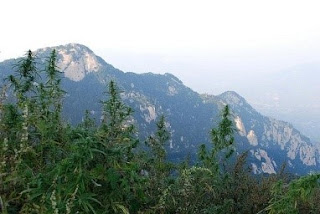 What next for cannabis in China?