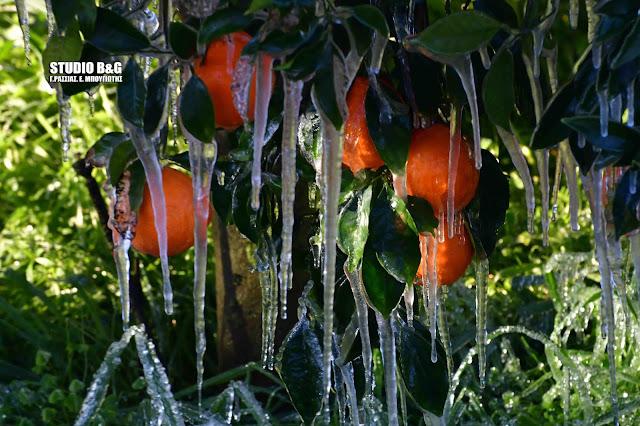 Απίστευτες εικόνες από τον παγετό στην Αργολίδα (βίντεο)