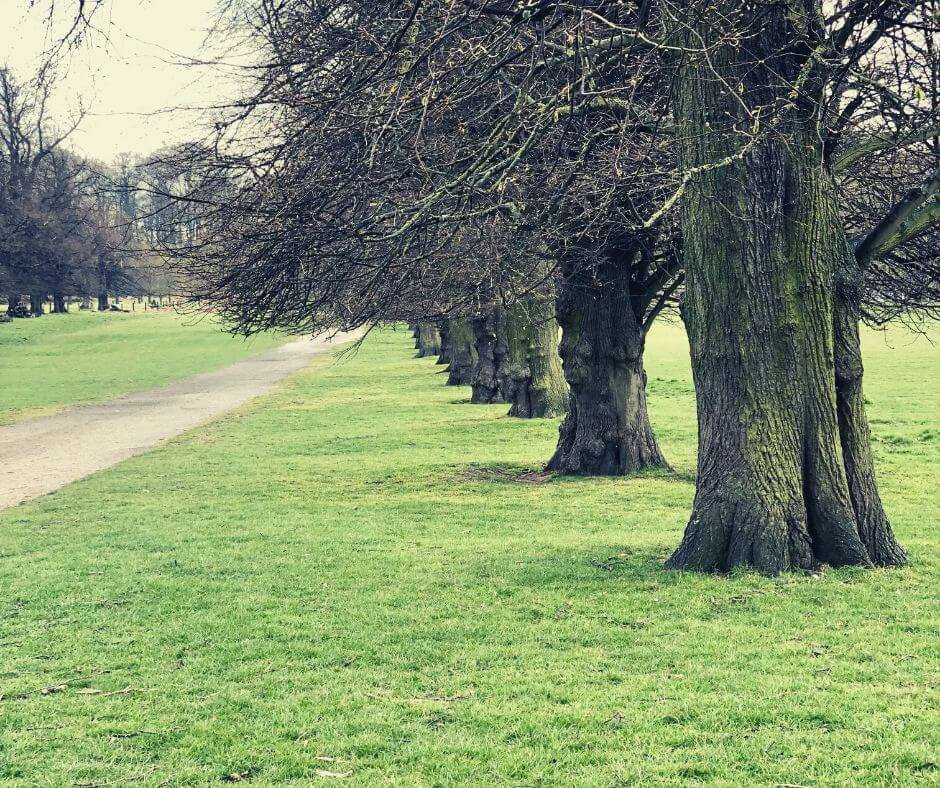 Coping With Changes To Routine Due To COVID-19 | Take a walk in a park to get a little alone time.