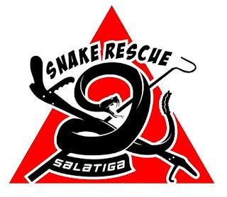 Ada Ular Masuk ke Rumah? Jangan Takut, Snake Rescue Salatiga Siap Bantu