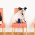 Safe Pet System: το πρώτο σύστημα υγείας για κατοικίδια...