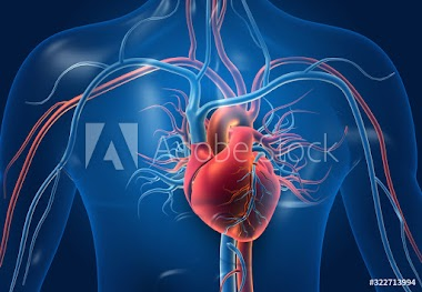 How does blood travel through the heart??-Health knowledge.