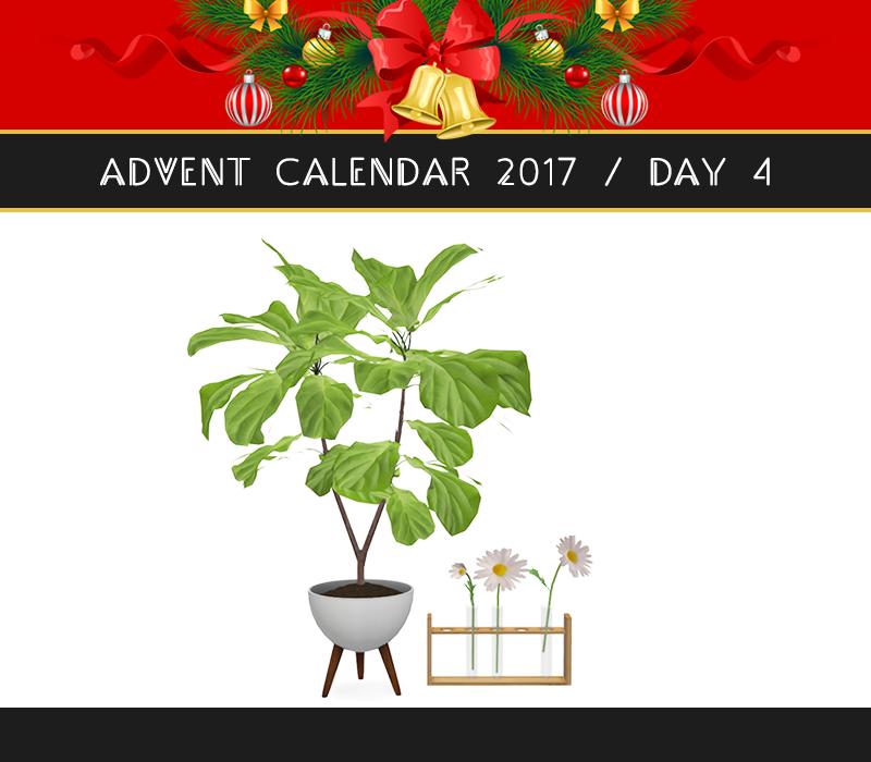 advent calendar 2017 day 4 ficus lyrat and marguerites. Black Bedroom Furniture Sets. Home Design Ideas