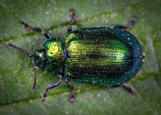 The most effective method to Get Rid of Rug Beetles