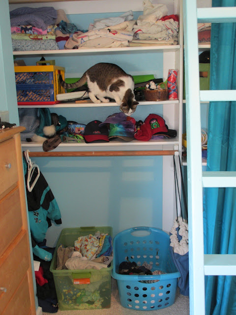closet with shelves - and a cat
