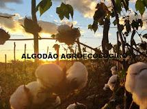 Com forte atuação na PB, projeto com Algodão Agroecológico é destaque nacional