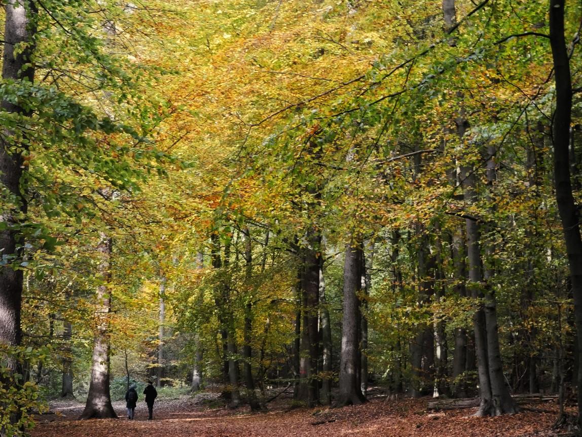 Naturschatz Sachsenwald