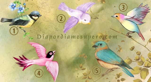 Elige un ave y descubre el mensaje que trae para ti