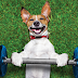 Why Exercise Is Essential for Your Pets
