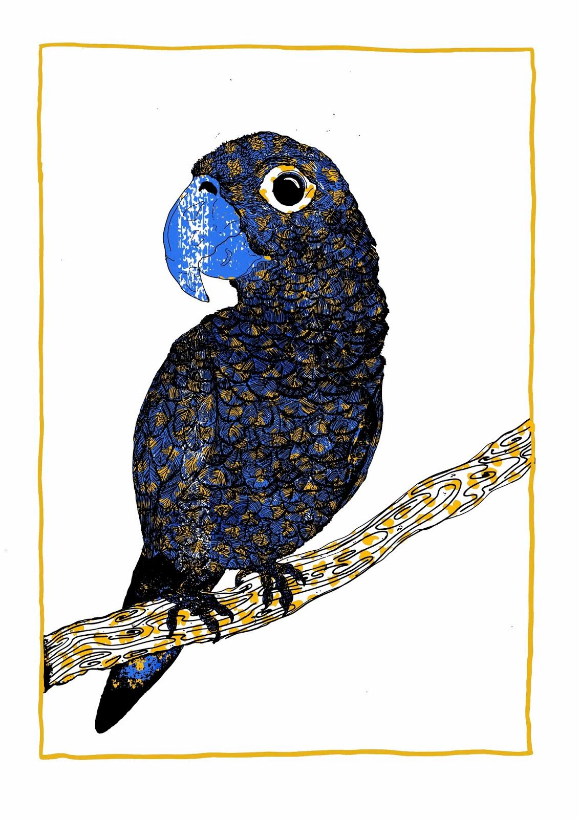 Pulling Prints: A little bit of parrot magic