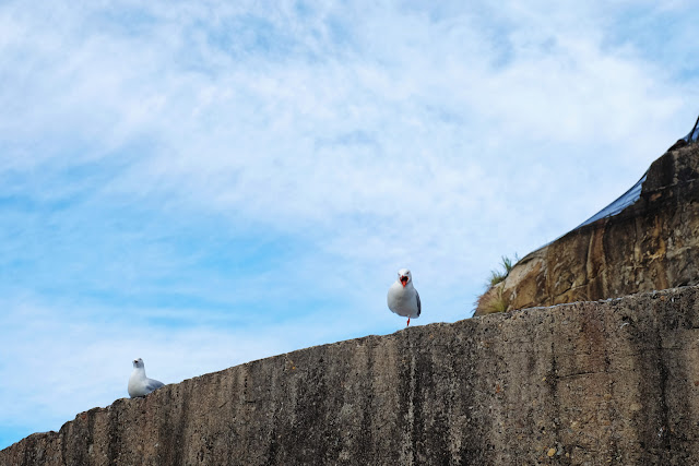 Segulls squarking on Cockatoo Island