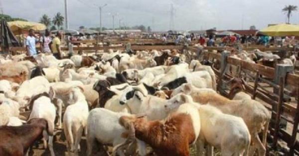 Seras, le coin des gourmands : Marché, viande, bœuf, mouton, abattoir, économie, commerce, animaux, cuisine, plat, repas, LEUKSENEGAL, Dakar, Sénégal, Afrique