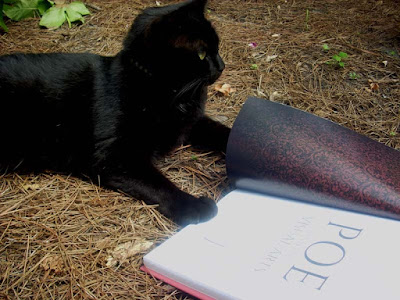 Pluto, a black cat, with a book