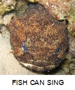 The incredible singing fish