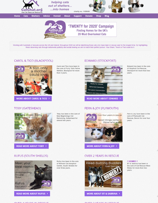 cats for adoption graphic