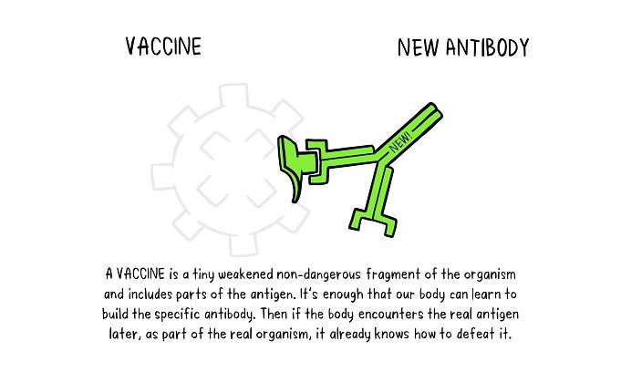 Vaccines Antibody illustration