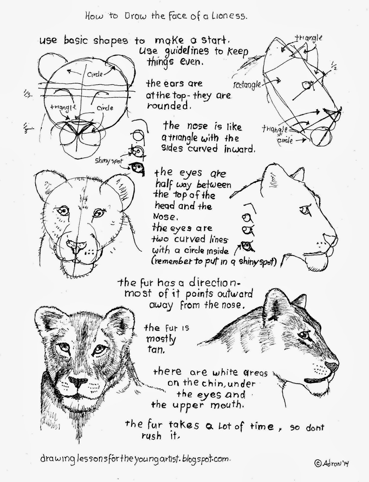 How To Draw Worksheets For The Young Artist How To Draw A Female Lioness Face Worksheet