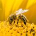 Con ong tiếng Anh là gì? Một vài ví dụ về con ong
