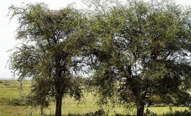 Picture challenge: Can you find a leopard in this picture?