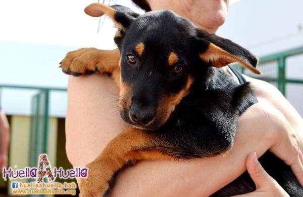 cachorro de tamaño mediano