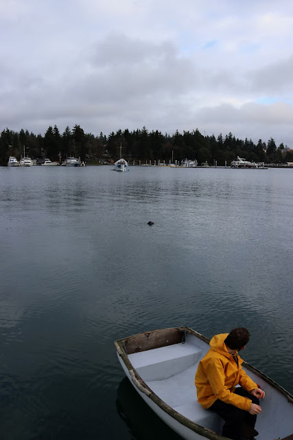 A seal swimming out behind the dinghy.