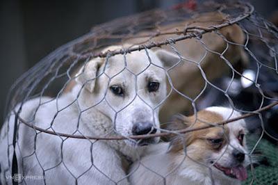 Hành hạ chó mèo bị phạt từ 1-6 triệu đồng