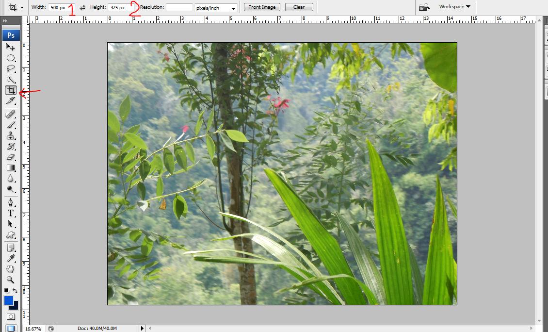 menggunakan crop tool di adobe photoshop