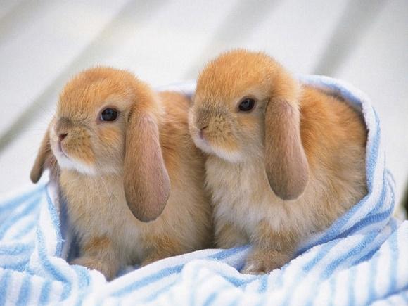 penyebab dan cara mengatasi kelinci tidak mau makan