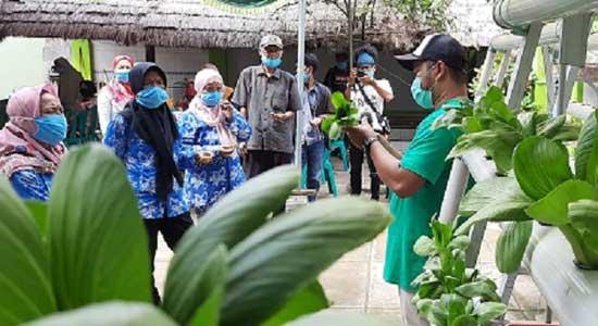 Pemilik Homestay Di Ciletuh Dilatih Budidaya Holtikultura