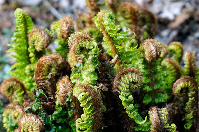 plants, ferns,