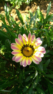[15+Beautiful] Flower Hd image collection