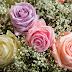 Rose stabilizzate: cosa sono, dove comprarle online e perchè preferirle a quelle naturali