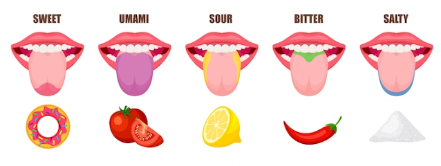 Taste-Receptors-Recognize-Sweet-Sour-Pungent-Bitter-Salty-Healing-Herbs-and-Spices
