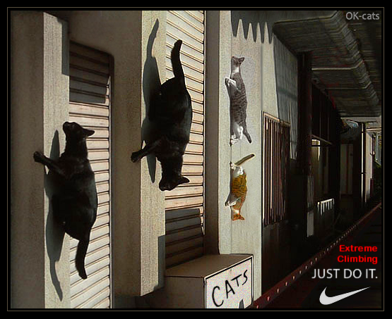 Photoshopped Cat picture • Extreme climbing. 4 spider cats climbing walls in the street. JUST DO IT.