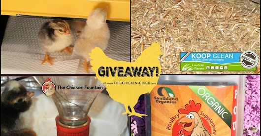 Baby Chick PRIZE PACKAGE GIVEAWAY at the Clever Chicks Blog Hop #226!