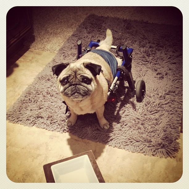wheels for dogs