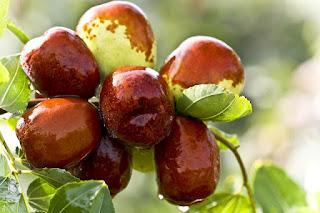 बेर- पौष्टिक- गुणों -से -भरपूर, Ber- Jujube- Fruit- Health- Benefits- in- Hindi, ber khane ke fayde , ber -frui-t in- hindi