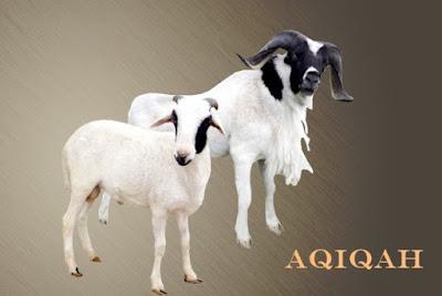 Aqiqah-detikinfo.my.id